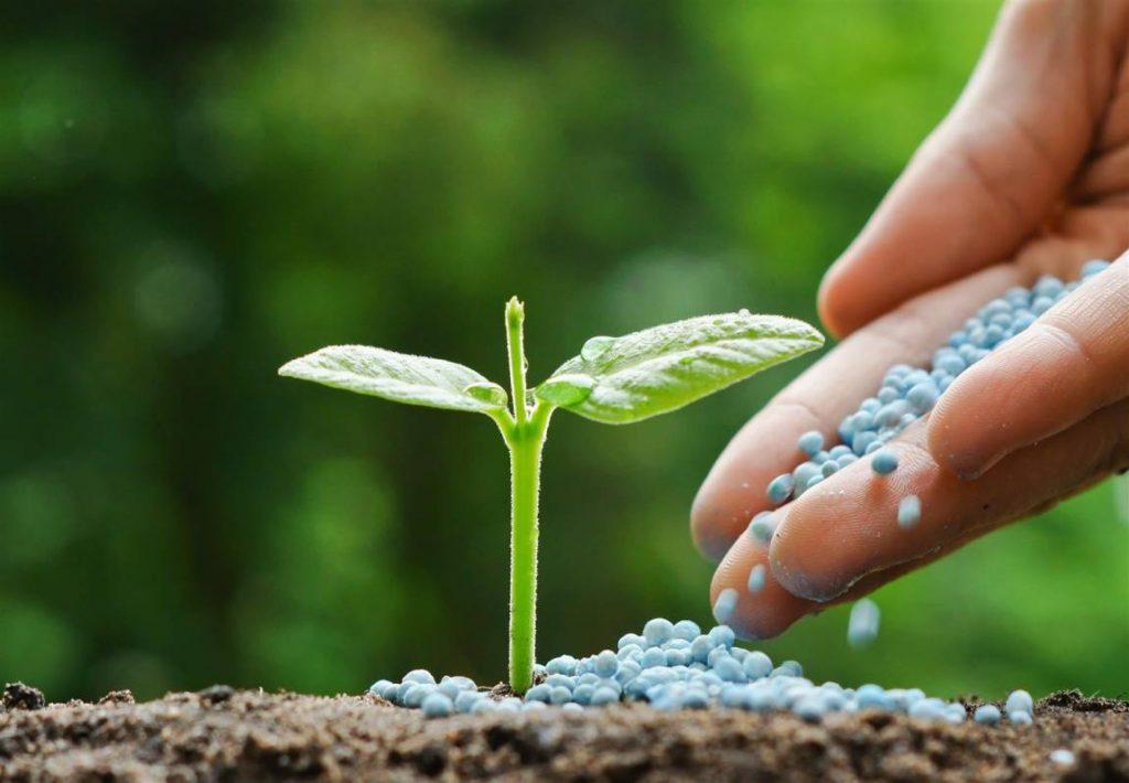 Uso de fertilizantes y abonos para el desarrollo de las for Importancia de un vivero