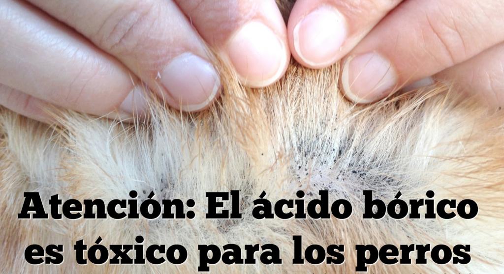 acido-borico-toxico-animales-domesticos