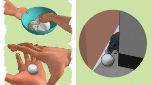 veneno-para-ratas-algodon-vinagre