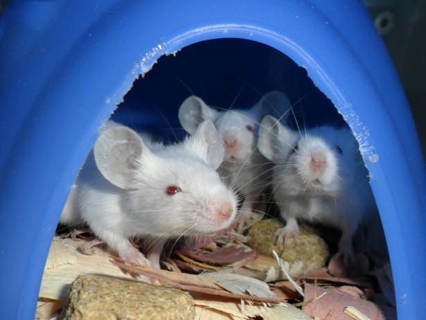 trampas para ratas y ratones