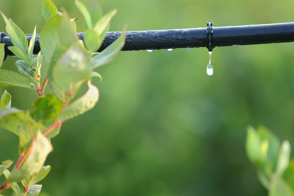 Drip Irrigation System Close Up