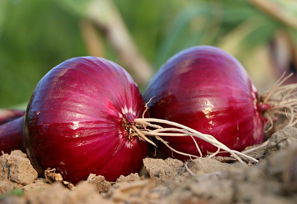 que plantar en febrero cebollas