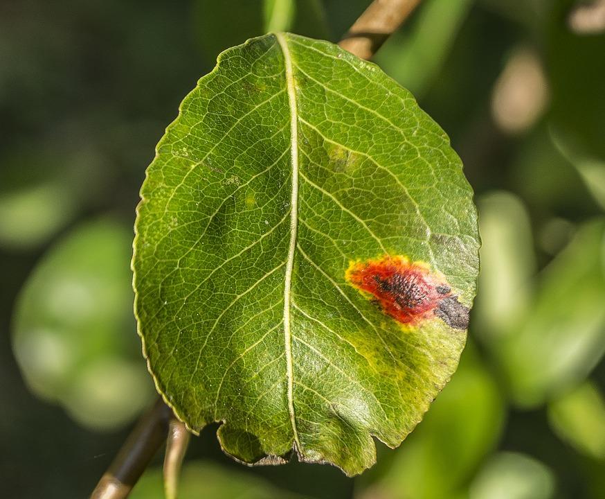 métodos de prevención de los hongos