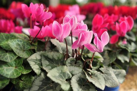 20 Plantas De Interior Con Fotos Y Características Lista