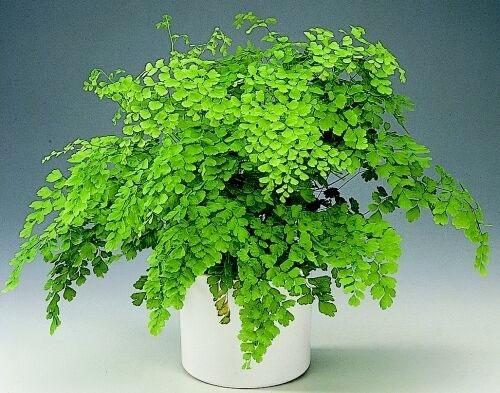 20 Plantas De Interior Con Fotos Y Caracteristicas Lista - Plantas-de-interior-verdes